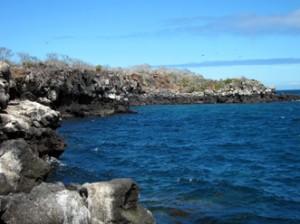 IMG 4355-300x224 in ... Galapagos!