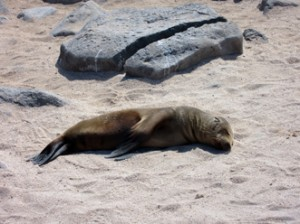 IMG 4376-300x224 in ... Galapagos!