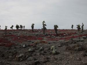 IMG 4548-300x224 in ... Galapagos!
