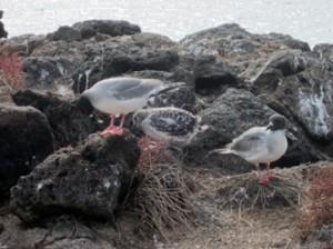 IMG 4569-300x224 in ... Galapagos!