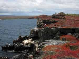 IMG 4595-300x224 in ... Galapagos!