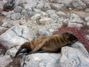 IMG 4646-300x224 in ... Galapagos!