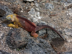 IMG 4652-300x224 in ... Galapagos!