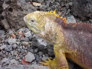 IMG 4656-300x224 in ... Galapagos!