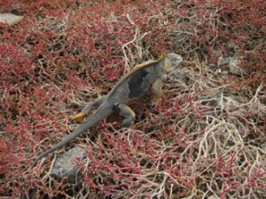IMG 4660-300x224 in ... Galapagos!