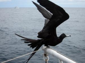 IMG 4674-300x224 in ... Galapagos!