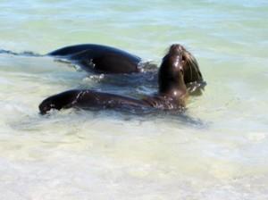 IMG 4718-300x224 in ... Galapagos!
