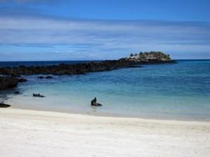 IMG 4722-300x224 in ... Galapagos!