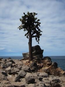 IMG 4725-224x300 in ... Galapagos!