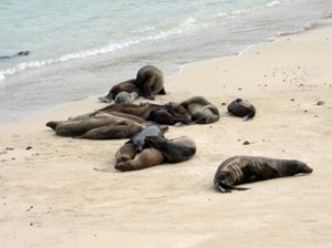 IMG 4765-300x224 in ... Galapagos!