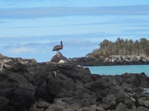 IMG 4767-300x224 in ... Galapagos!