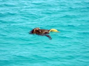 IMG 4811-300x224 in ... Galapagos!