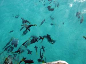 IMG 4827-300x224 in ... Galapagos!