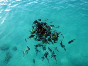 IMG 4831-300x224 in ... Galapagos!