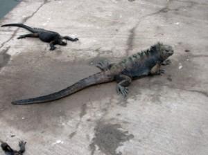 IMG 4843-300x224 in ... Galapagos!
