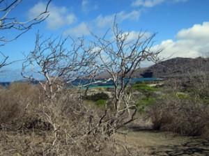 IMG 4963-300x224 in ... Galapagos!