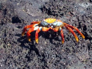 IMG 4975-300x224 in ... Galapagos!