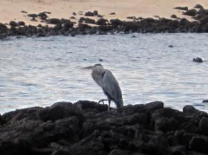 IMG 5015-300x224 in ... Galapagos!