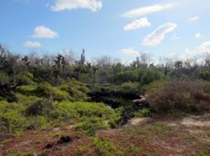 IMG 5016-300x224 in ... Galapagos!
