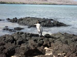 IMG 5019-300x224 in ... Galapagos!