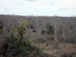 IMG 5029-300x224 in ... Galapagos!
