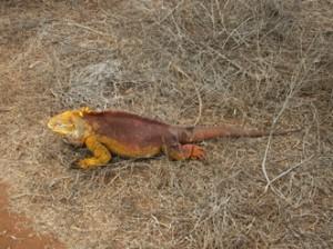 IMG 5042-300x224 in ... Galapagos!
