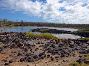 IMG 5048-300x224 in ... Galapagos!