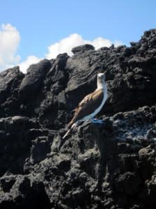 IMG 5093-224x300 in ... Galapagos!
