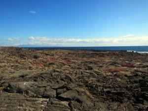 IMG 5128-300x224 in ... Galapagos!