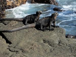 IMG 5139-300x224 in ... Galapagos!