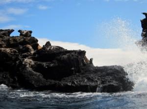 IMG 5171-300x224 in ... Galapagos!
