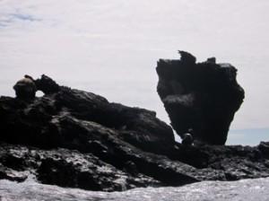 IMG 5172-300x224 in ... Galapagos!
