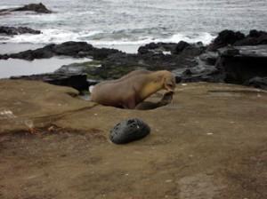 IMG 5330-300x224 in ... Galapagos!