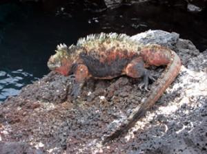 IMG 5365-300x224 in ... Galapagos!