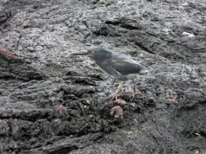 IMG 5370-300x224 in ... Galapagos!