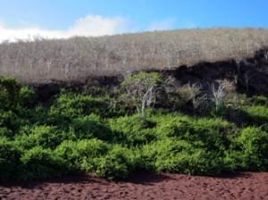 IMG 5480-300x224 in ... Galapagos!