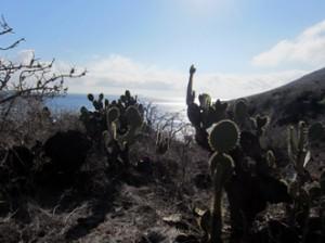 IMG 5486-300x224 in ... Galapagos!