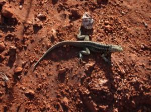 IMG 5513-300x224 in ... Galapagos!