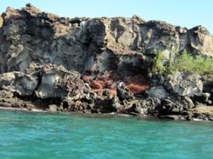 IMG 5583-300x224 in ... Galapagos!