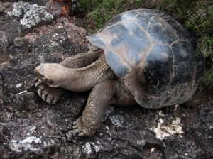 IMG 5619-300x224 in ... Galapagos!
