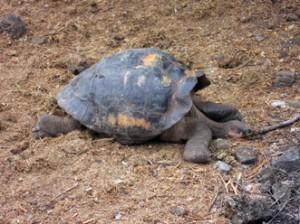 IMG 5628-300x224 in ... Galapagos!
