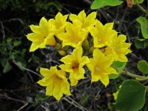 IMG 5640-300x224 in ... Galapagos!