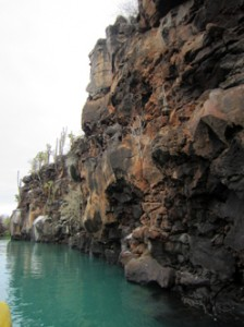 IMG 5657-224x300 in ... Galapagos!