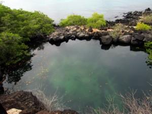 IMG 5665-300x224 in ... Galapagos!