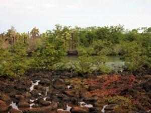 IMG 5690-300x224 in ... Galapagos!
