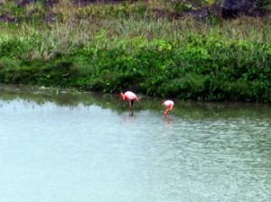 IMG 5697-300x224 in ... Galapagos!