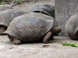 IMG 5704-300x224 in ... Galapagos!