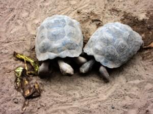 IMG 5707-300x224 in ... Galapagos!