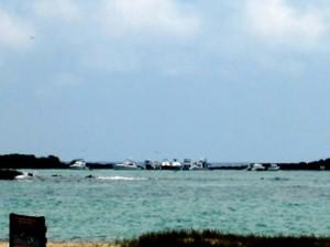 IMG 5724-300x224 in ... Galapagos!