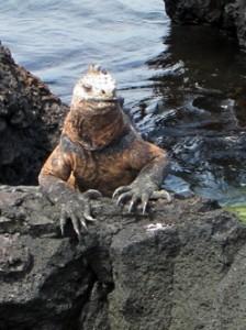 IMG 5752-224x300 in ... Galapagos!